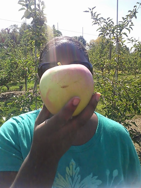 Apple Picking Photo - 3